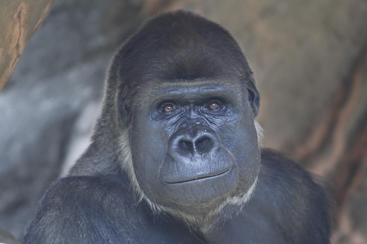 協力> 千葉市動物公園:公式HP