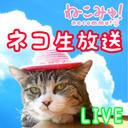 ねこみゅ!LIVE@猫カフェ「たまねこ」