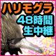 キーワードで動画検索 乳 - ハリモグラ48時間生中継【今月のいきもの】