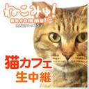 猫カフェ「ニャンシー」 生中継