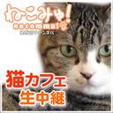 猫カフェ「たまねこ」 居酒屋クッキー出現で放送