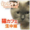 秋葉原の猫カフェ生中継