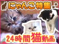 24時間にゃんこづくし!にゃんこの日 癒しの猫映像「Cat Healing」一挙放送