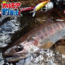 【カルモア釣査団】初の渓流でヤマメを狙う!