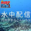 【限定】渓流で水中配信!釣りの前に事前観察を行う [水中カメラ]