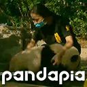 中国成都から赤ちゃんパンダの成長を伝える生放送!ほら春咲子パン♪みにみに見に来てね♪
