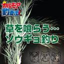 【カルモア釣査団】中国四大家魚  ソウギョ釣り [ロマン砲] 今年ラスト
