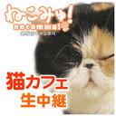 【猫カフェ生中継】新宿「きゃりこ新宿店」
