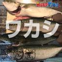 【限定】近所で釣れた45cm位の青物で夕食つくり♪