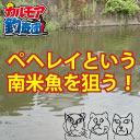 カルモア釣査団◆レア魚釣り
