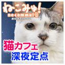 【猫カフェ深夜定点】桜木町「にゃんくる桜木町店」