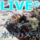 【ライブで水の中#154】遠征枠 太平洋のおさかなさん待っててねぇ~ 【静岡県】