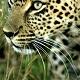 《がおーっ》アフリカ・サバンナ野生動物ツアー 生中継【7月16日 朝】