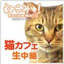 【猫カフェ生中継】志木「ニャンシー」2/14(水) 純血種揃いの中で特に目を引く体重約10㌔猫さん在籍!
