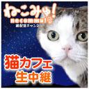 猫カフェ深夜定点