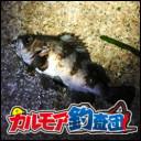 高級餌ユムシでキビレを釣る
