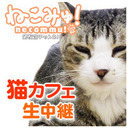鎌倉の猫カフェ放送
