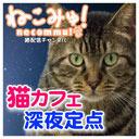深夜の保護猫カフェを見守る