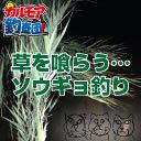 【カルモア釣査団】中国からの使徒、ソウギョ釣り!関東のスーパービッグゲーム!