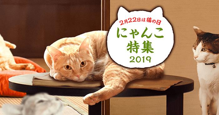 にゃんこ特集2019