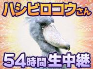 ハシビロコウさん54時間生中継@千葉市動物公園【今月のいきもの】