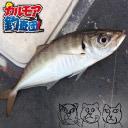 東京都でアジ釣り[ぶっ込みサビキ釣り]