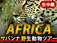《がおーっ》アフリカ・サバンナ野生動物ツアー 生中継【5月29日 朝】