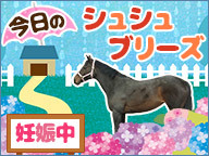 【馬】今日のシュシュ