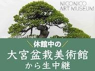 休館中の大宮盆栽美術館から1日限りの特別展を生中継 出演:橋本麻里《ニコニコ美術館》