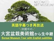 【Bonsai Museum Tour with English subtitles】大宮盆栽美術館を巡りながら英語を学べる再放送【ニコニコ美術館】