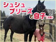 【馬房定点】今日のシュシュブリーズと息子(次男) 7月30日